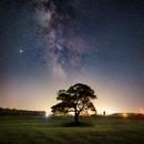 Milky Way over oak tree framed in light pollution,                                Simon d'Entremont