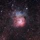 M20 - Trifid Nebula,                                Ryan Wierckx