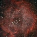 Rosette (Astronomik UHC Filter),                                Robin Clark - EAA imager