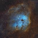 IC 410 Tadpoles in hubble colors,                                Jens Zippel