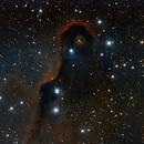 IC1396 Elephant Trunk,                                francopanetta