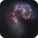 NGC 4038 and NGC 4039 - Courtesy of the Hubble Space Telescope,                                Dean Jacobsen