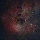Cosmic Sperm (Tadpoles, IC 410),                                Scott Denning