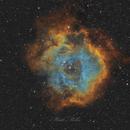 C49 - Rosette Nebula in SHO Hubble Palette,                                Matt