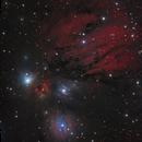 NGC 2170 in Monoceros,                                Steve Milne