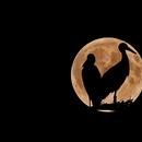 Love moon,                                floreone