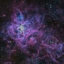 The Tarantula Nebula (NGC 2070),                                Miles Zhou