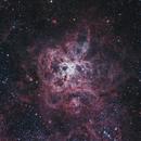 Tarantula Nebula,                                Michael Wong