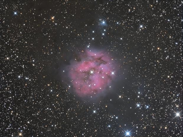 Cocoon Nebula,                                Albert van Duin