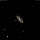 ngc4605  galassia in carro maggiore          distanza 16 milioni   A.L.,                                Carlo Colombo