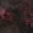 Northern Cygnus,                                Bill