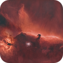The Horsehead  nebula and friends, starless,                                Roy Hagen