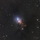 NGC 1333  reflection Nebula,                                Dawn Lowry