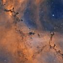 Bok Globules in NGC2237,                                Sara Wager