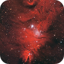 Cone & Fox Fur Nebulae and Christmas Tree Cluster,                                Jarrett Trezzo
