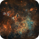 Early Morning Spider NGC 2070,                                Nick Axaris