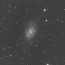NGC2403 from the backyard,                                Elboubou