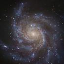 M101 - Pinwheel Galaxy,                                Matthew