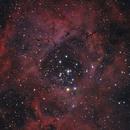 Rosette Nebula,                                Gregg
