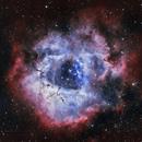 NGC 2237 Rosette Nebula,                                Eric Horton