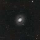 NGC 4736 Croc's Eye Galaxy - LRGB,                                Richard H