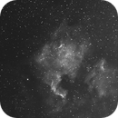 NGC7000,                                Pavel Nikolaev