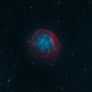 Abell-31 (Sh2-290),                                Kathy Walker