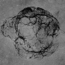 Simeis 147 Struktur H-alpha OIII,                                Franz Gruber