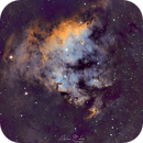 NGC7822 Forming Star (SHO),                                Michael Caller