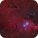 NGC 2264 Christmas tree, Cone and Fox Fur ,                                Alberto Pisabarro
