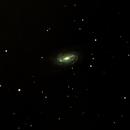 NGC2903,                                Daniele Viarani
