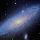 Andromeda - Florida Swamp,                                Fritz