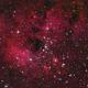 IC410-NGC1893      The Tadpoles Nebula,                                 Constantino