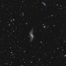 NGC 660,                                Anna Morris