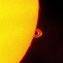Sunspot AR2673 Coronal Loop,                                Rathi Banerjee