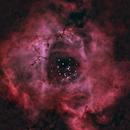Rosette,                                Mte1022