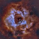 Rosette Nebula Bi-Color,                                Carl Marx