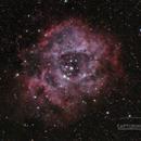 The Rosette Nebula,                                Matthew McLaughlin