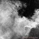 Portion of the North America Nebula (NGC7000) - H-Alpha Data,                                William Tan