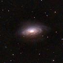 NGC-3521 Intermediate Type SABb galaxy in LEO,                                Stargazer66207