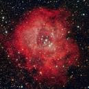 The Rosette Nebula,                                Richard S. Wright Jr.