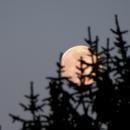 Pink Full moon,                                nonsens2