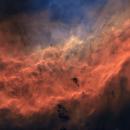 California nebula bicolor,                                Michael