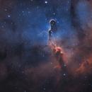 Elephant trunk - IC 1396,                                Markus Wiedmann