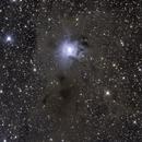NGC 7023 Iris Nebula LRGB,                                M. Levens