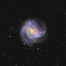 M83  Southern Pinwheel Galaxy,                                Christian_Hilbert