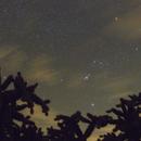 Orion Cholla,                                Ray Heinle