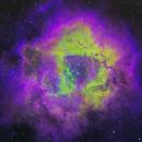 Rosette Nebula in CFH Palette,                                David McClain