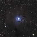 C4 / NGC 7023 / The Iris Nebula,                                Frederick Steiling