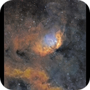 The Tulip Nebula,                                Metsavainio